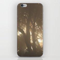 Sun Light & the Mistty Trees iPhone & iPod Skin
