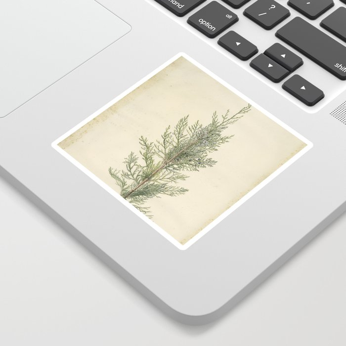 Botanical Juniper Sticker