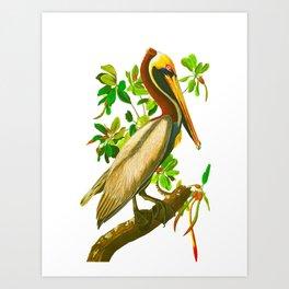 Brown Pelican John James Audubon Vintage Scientific Bird Illustration Art Print