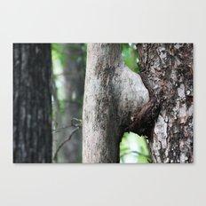 Tree sex  Canvas Print