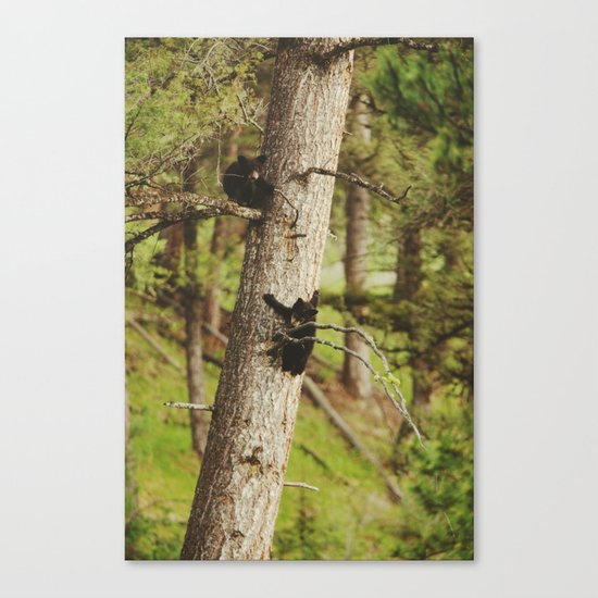 Climbing Cubs Canvas Print
