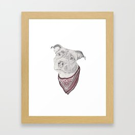 pitbull//dog Framed Art Print