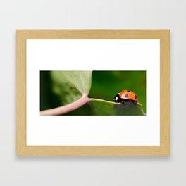 Ladybug walking on leaf Framed Art Print
