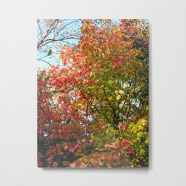Autumn Leaves I Metal Print