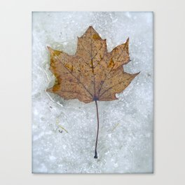 Thawing Out Canvas Print