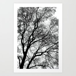 Tree Silhouette Series 1 Art Print
