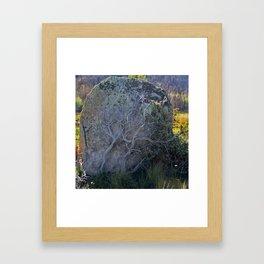 Bush Climbing up Rock Framed Art Print