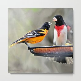 Food Fight: Oriole and Grosbeak Metal Print