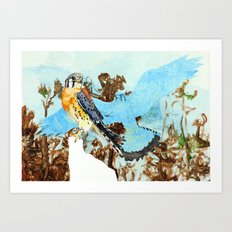 South Eastern American Kestrel of the Pine Rocklands Art Print