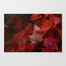September Rain Canvas Print