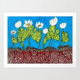 Bloodroots - Sanguinaria canadensis Art Print