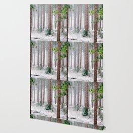 Vivid Snow Forest (Color) Wallpaper