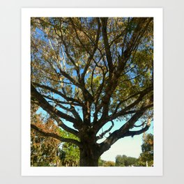 Sunset tree Art Print