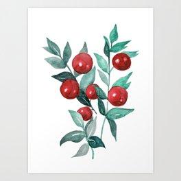 Butchers broom red berries Art Print