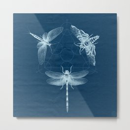 X-RAY Insect Magic Metal Print