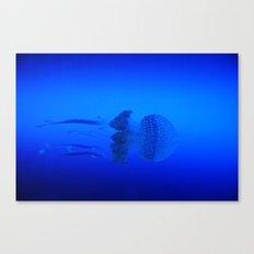 Jellyfish, Phyllorhiza punctata Canvas Print