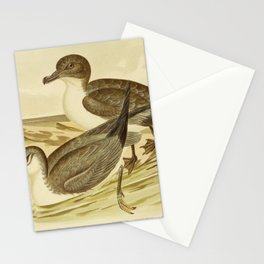 Vintage Print - The Birds of Australia (1890) - Blue Petrel / Cape Petrel Stationery Cards