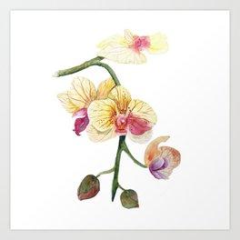 Hand drawn watercolor pretty orchidea Art Print