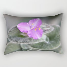 Tradescantia sillamontana - White Velvet Rectangular Pillow