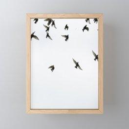 Birds Framed Mini Art Print
