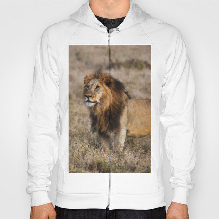 African Lion in Kenya Hoody