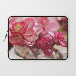 Succulent Garden Cactus Red Flowers Tropical Cacti with drops Laptop Sleeve