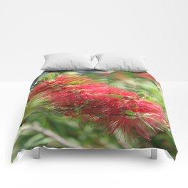 Calliandra Haematocephala Red Powderpuff  Comforters