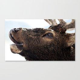 Watercolor Bull Elk Greeting Canvas Print