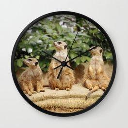 Meerkat20150502 Wall Clock