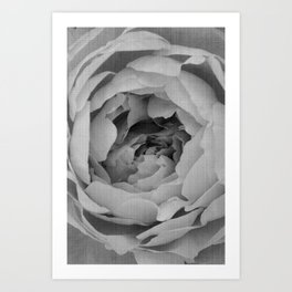 Blak and white rose Art Print