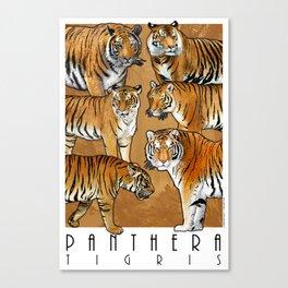 Tigers - Panthera Tigris Canvas Print