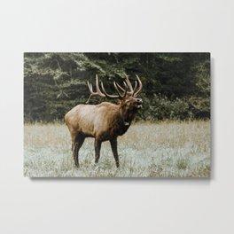 Elk Life III Metal Print