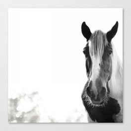 Horse with no name Canvas Print