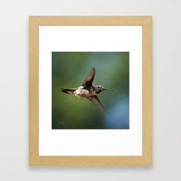 Hummingbird Swoop Framed Art Print
