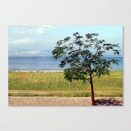 Sea of Galilee Tree Canvas Print