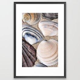 Seashell 2 Framed Art Print