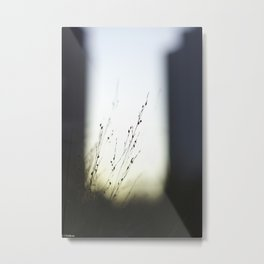 High Grass in the City Metal Print