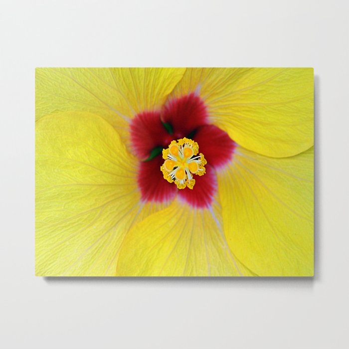 Yellow flower ## Metal Print