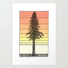 Coastal Redwood Sunset Sketch Art Print
