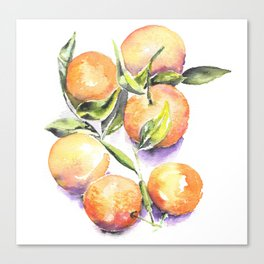 Sweet Clementines Canvas Print