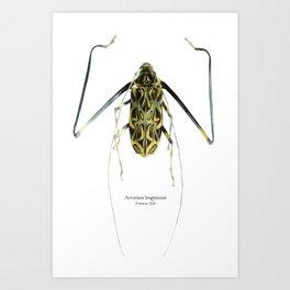 Acrocinus (Color) Art Print