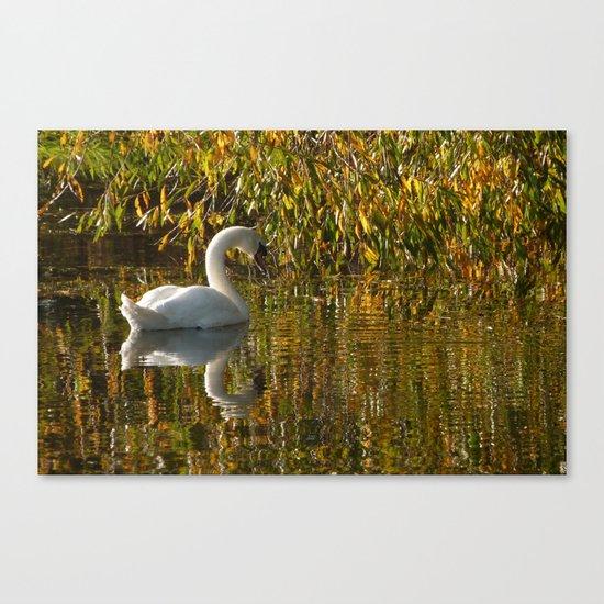 Idle Swan Canvas Print