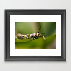 Bookworm - Monarch Caterpillar Larvae Framed Art Print