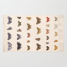Vintage Hand Drawn Scientific Insect Anatomy Colorful Butterfly Illustration Rug