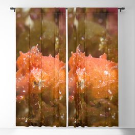 Adorably angry orange cuttlefish Blackout Curtain