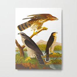 Goshawk Bird Metal Print