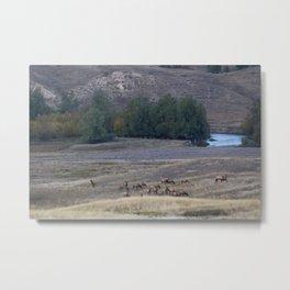 Elk Herd at Dusk Metal Print