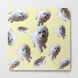 Mulli Bear Metal Print