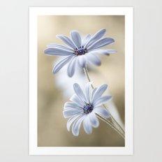 Cape daisies Art Print
