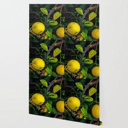 Winter Lemons Wallpaper